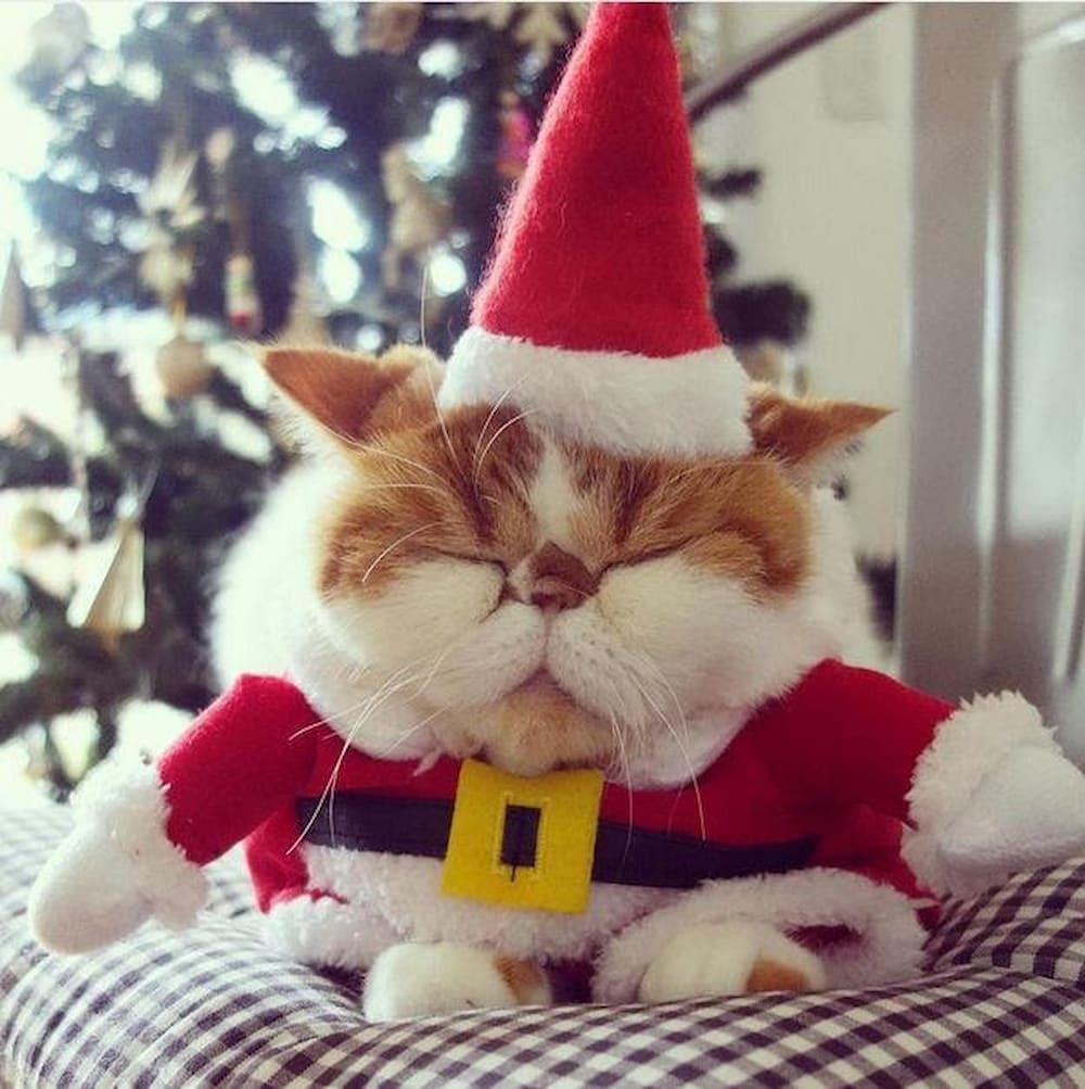 gato com roupa de papai noel